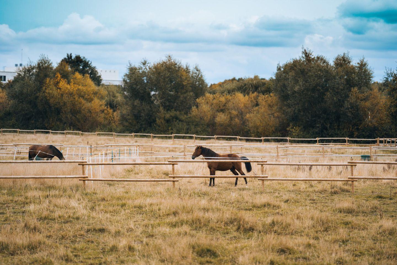 Pferde auf einer Farm in Australien
